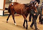 Stronger Market Continues at Tatts December 