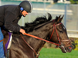 Take Charge Indy works at Churchill Downs, October 29, 2011.
