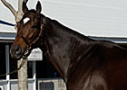 Take Charge Lady Filly Wins in Debut