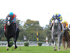 Take the Points wins the 2009 Jamaica.