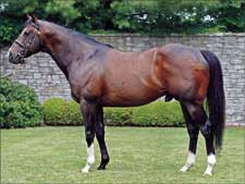 Coolmore Sires Return to U.S.