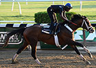Fipke Likes Belmont Chances of Tale of Verve