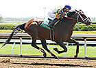 Tale of Verve Among 22 Entered for KY Derby