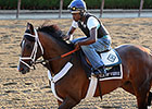 Tale of Verve Under Consideration for Travers
