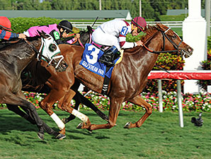 Tapicat wins the 2014 Voodoo Dancer Stakes.