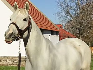 Leading Sire of 2014 - Tapit