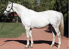 Tapit's Stud Fee Doubles for 2015 Season