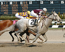 Tapit May Return in Haskell Invitational