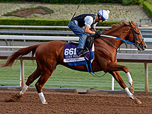 Tapiture works at Santa Anita for the Breeders' Cup Oct. 26, 2014.