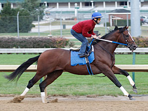 Tapizar works at Churchill Downs for teh Breeders' Cup 10/24/2011.