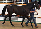 Changes Made to Tattersalls October Sale