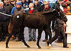 Increases on Day 1 of Tattersalls Foal Sale