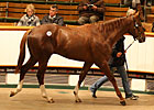 Shamardal Colt Tops Craven Breeze Up Sale