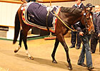 Cat Junior Tops Tattersalls' Second Session