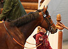 Fallen Idol, Well Sharp Shine at Tattersalls