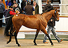 Record Gross at Tattersalls Autumn Sale