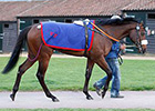 War Front Colt Tops Tattersalls Craven Day 2