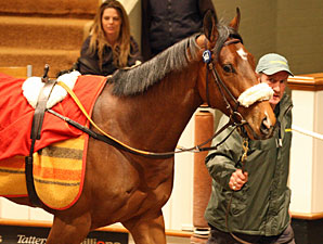 Elusive Quality Colt Sold for Record Price