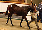 Sea The Stars' Progeny Shines at Tatts Sale