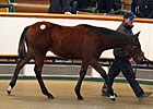 Tattersalls Foal Sale Ends Strong