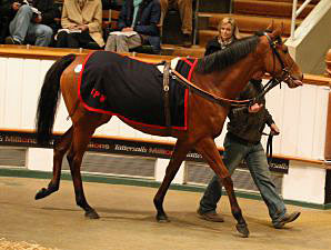 Rises Across The Board At Tattersalls