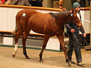 Record-Breaking Day at Tattersalls December
