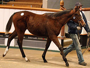 Turnover Rises as Tattersalls Foal Sale Ends