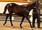 Ballylinch Stallions Fare Well at Tattersalls