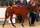 Record Gross, Median at Tattersalls Foal Sale