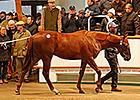 Lope de Vega Colt Leads Tattersalls Trading