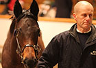 Dubawi Fillies Best Sellers at Tattersalls