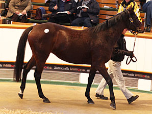 Two Mares Share Top Price at Tattersalls