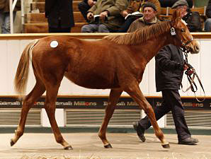 European Sales Record Eclipsed at Tattersalls