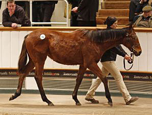 Gordon-Watson Tops List at Tattersalls