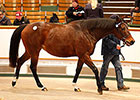 Tattersalls Ends Year With Record Turnover
