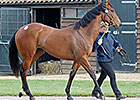 Six-Figure War Front Filly Tops Tattersalls
