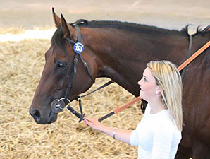Tattersalls July Sale Off to Strong Start