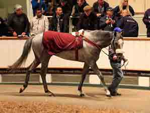 95% Clearance Rate on Day 2 at Tattersalls