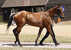 Increases Across Board at Tattersalls July