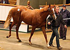 Exceed and Excel Colt Sets Tattersalls Pace