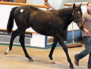 Average, Median Rise at Tattersalls Sale