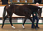 Pivotal Filly, Galileo Colt Bring Top Prices