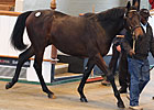 Gross Increases in Tattersalls' Book Two
