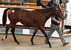 Tattersalls Book 2 Continues to Soar