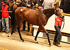 Galileo Yearling Fillies Tops at Tattersalls