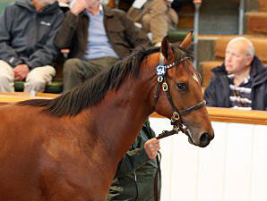 Tattersalls Concludes Record Book 1 Sale