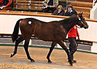Rip Van Winkle Colt Tops Tattersalls Session