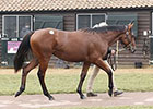 Dubawi Colt Sells for Book 2 Record Price