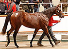 More Marks Fall at Tattersalls Yearling Sale