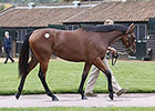 Dubawi Filly at Tattersalls Surpasses $3M